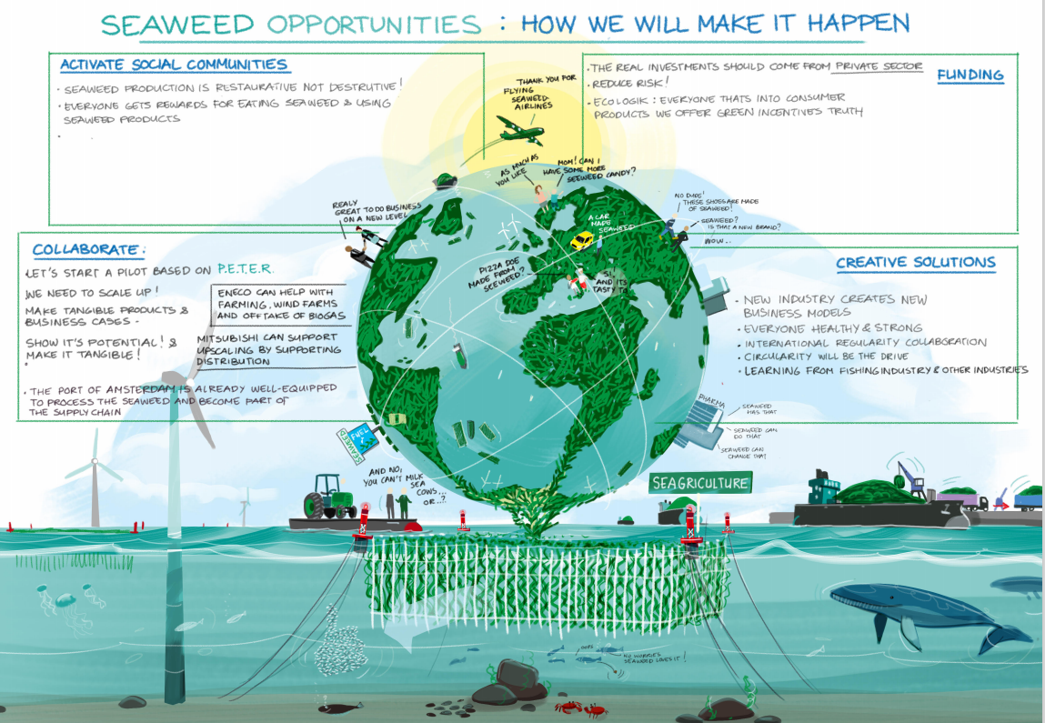 Seaweed opportunities: making it happen